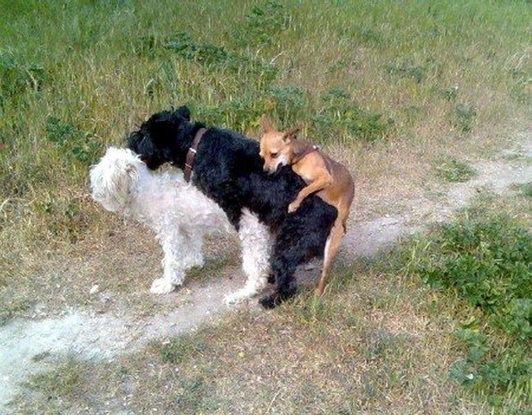 23 забавные фотоистории из жизни собак. Выпуск 2.