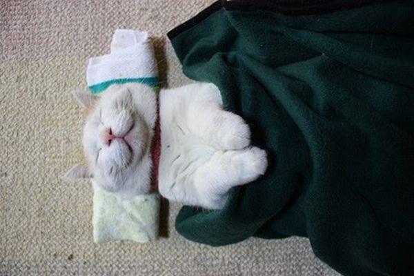 20 котов, которые знают толк в качественном отдыхе