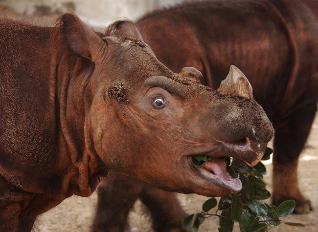 15 фото ну очень удивленных животных