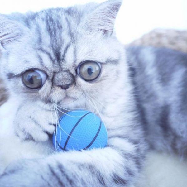 """Cамый """"удивленный"""" котенок в мире обрел семью"""