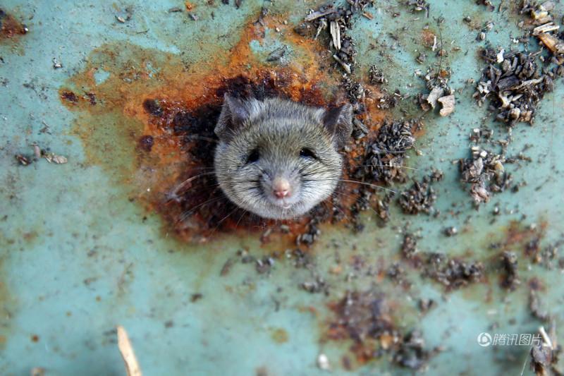 Мышка застряла в мусорном баке. Пришлось проводить спасательную операцию!