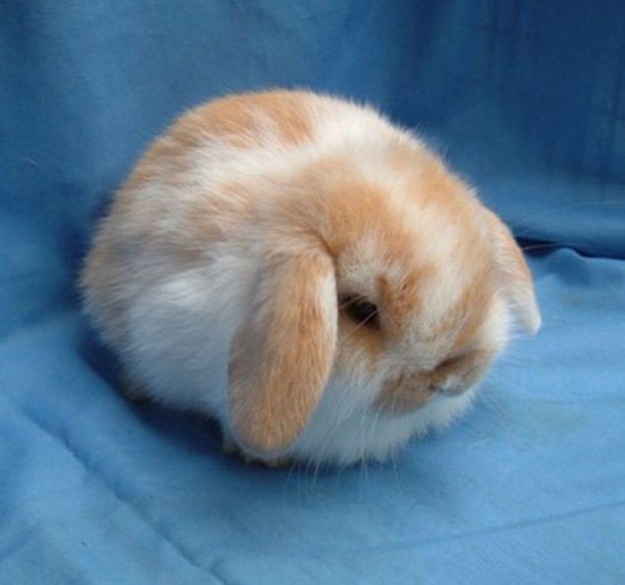20 фото животных идеальной округлости