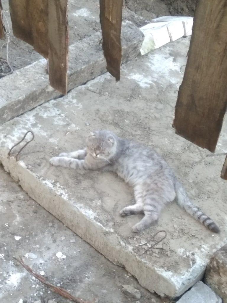 """19 головоломок из цикла """"Найди кота"""""""