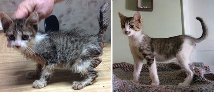 17 фото чудесных превращений спасенных котиков