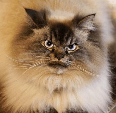 Новая звезда кошачьего интернета. Знакомьтесь: Мерлин!