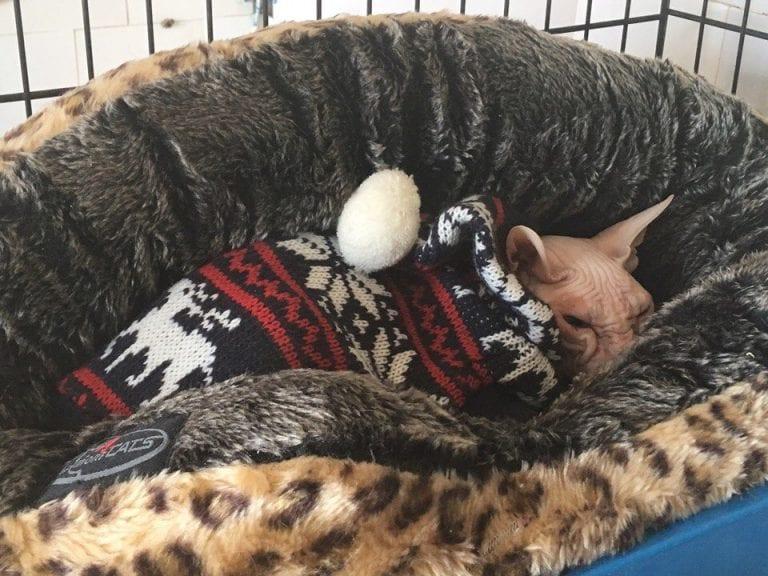 В Омске мужчина потребовал усыпить свою здоровую кошку