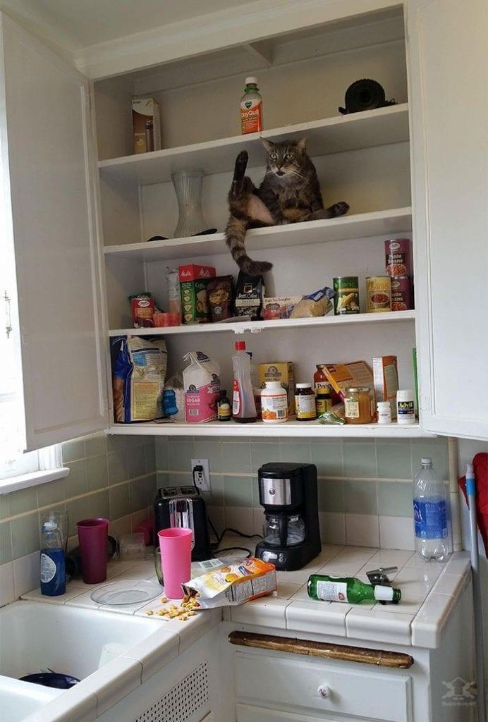 23 фото котов-шкодников, без которых жизнь была бы не такой интересной