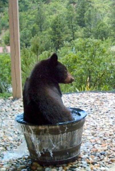 Хозяева дачи не могли понять, куда за ночь девается вода из бочки