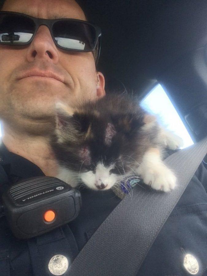 Люди ехали в машине, как вдруг мимо пролетел котенок