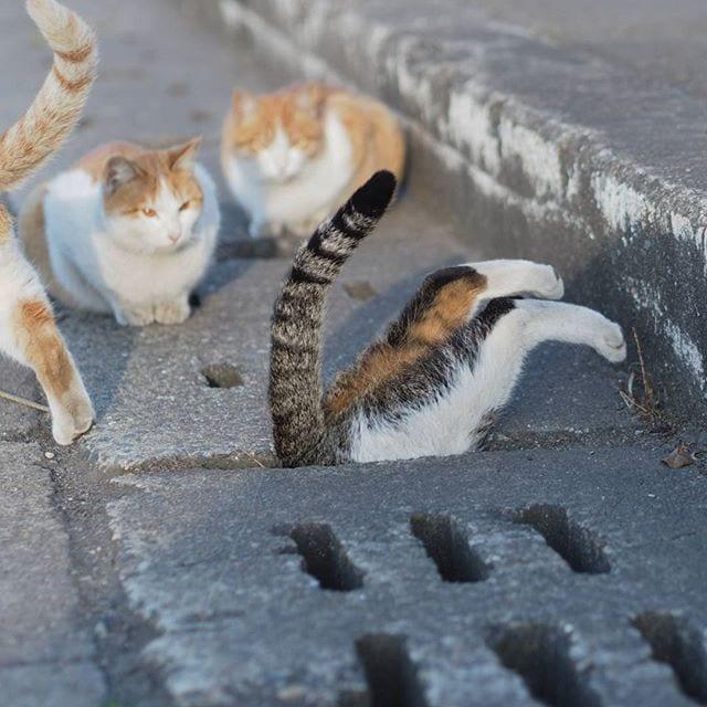 Смешные развлечения бродячих кошек