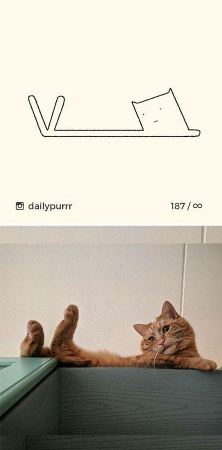 """Проект """"DailyPurrr"""" доказал - кот может принять любую форму"""
