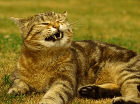 30 фото котов, которые вот-вот чихнут