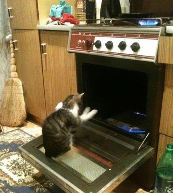 30 фото, доказывающих, что в котах есть нечто демоническое
