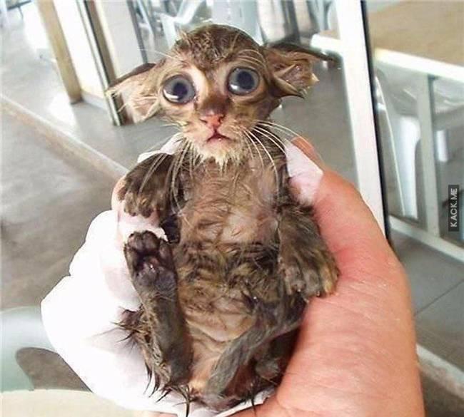 20 фото забавных мокрых животных