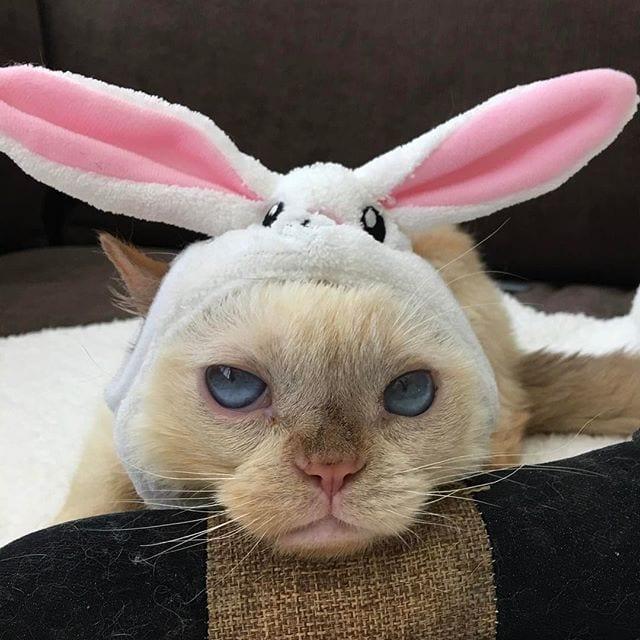 """Как искалеченный трехлапый котенок стал """"лицом"""" фирмы"""