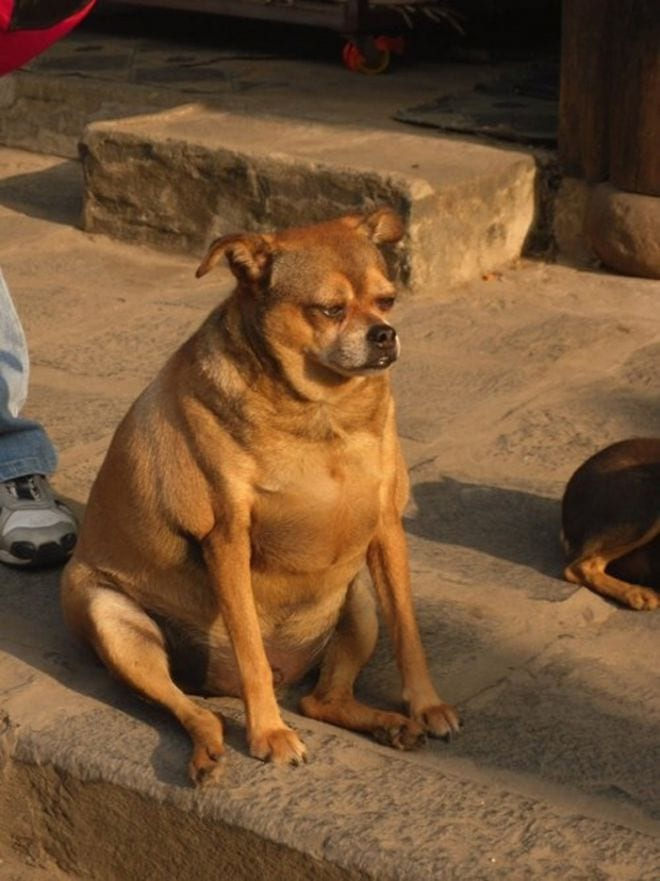 18 фото животных, настроенных на философский лад