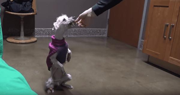 Удивительное преображение собаки, от которой шарахались люди