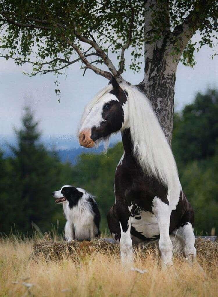 28 пар животных, которые выглядят как близнецы, но они не родственники