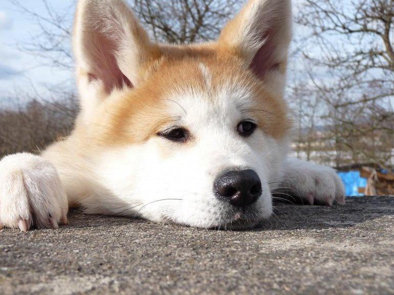 17 собак, которые очень сильно обиделись на своих хозяев