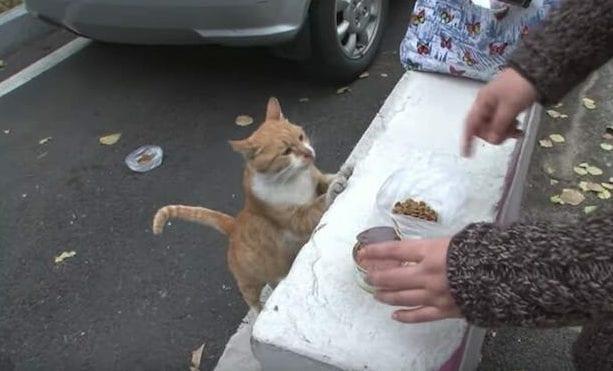 Бездомная кошка принимала угощение только в пакете. Люди решили узнать, почему.
