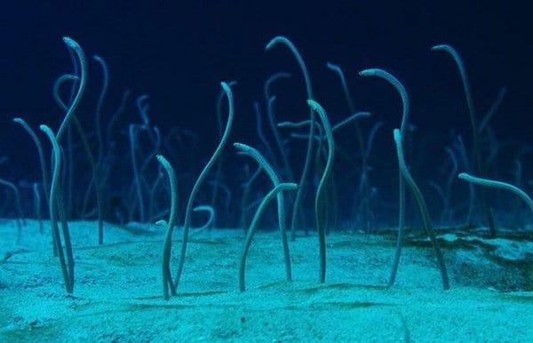 """ВИДЕО: Как только дайвер уплыл, на дне моря мгновенно вырос """"сад"""""""