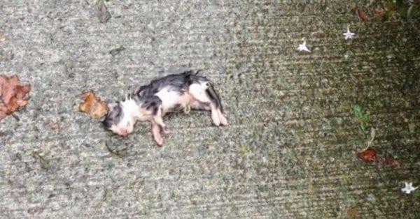 Женщина чуть было не прошла мимо котенка с пуповиной без признаков жизни