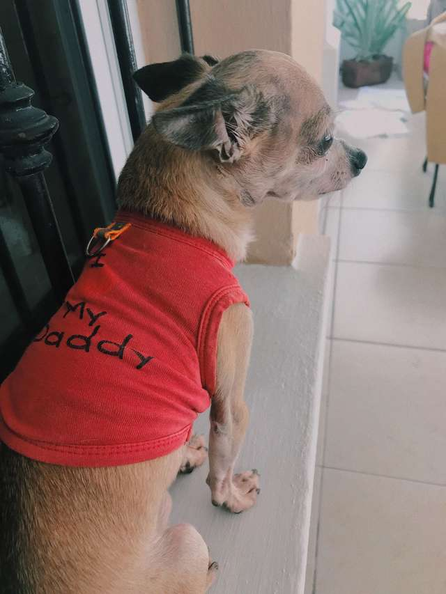 Собака учуяла запах хозяина через 6 лет после того, как его не стало
