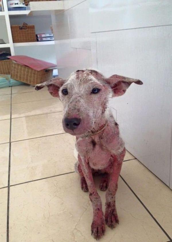 Бездомный пес не растерялся и воспользовался своим единственным шансом на спасение
