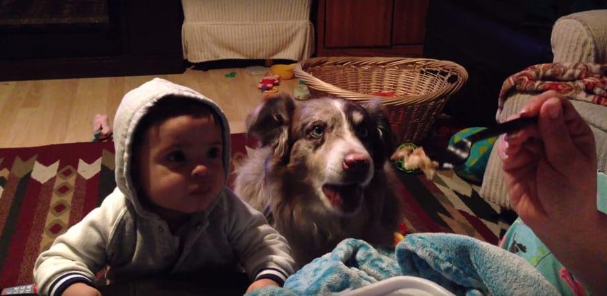 Сыну обещали угощение за слово «мама». Пёс тоже решил попытать счастья.