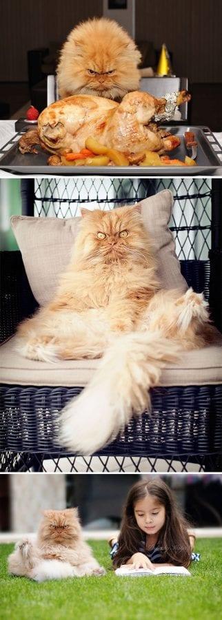 30 самых недобрых котиков Интернета