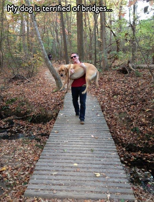 16 ситуаций, которые знакомы всем владельцам собак