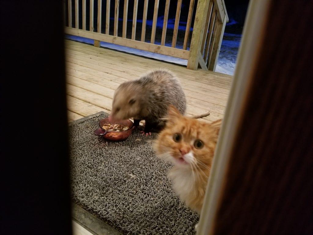 7 ФОТО: Реакция ошалевшего кота, у которого украли ужин
