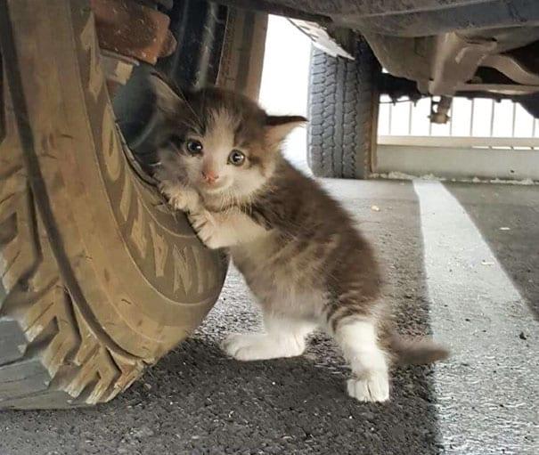 Мужчина не смог оставить на улице котенка, найденного под грузовиком