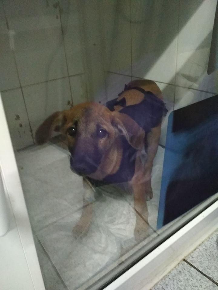 Жизнь собаки висела на волоске, но днепровские ветеринары совершили невозможное