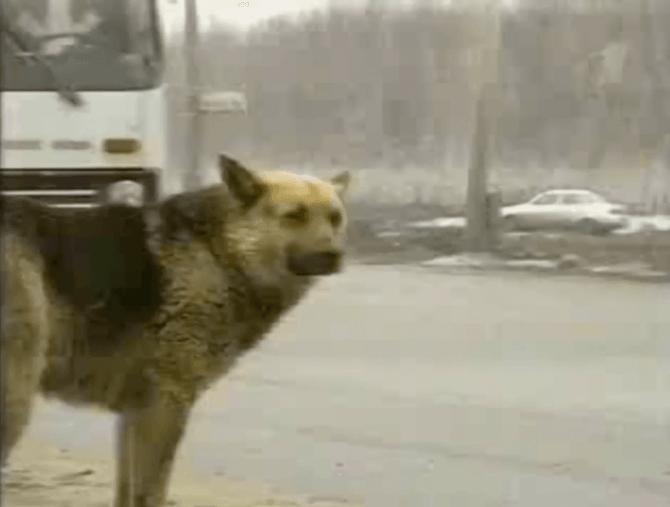 """История о русском """"Хатико"""": верная собака 8 лет ждала погибшего хозяина на обочине дороги"""
