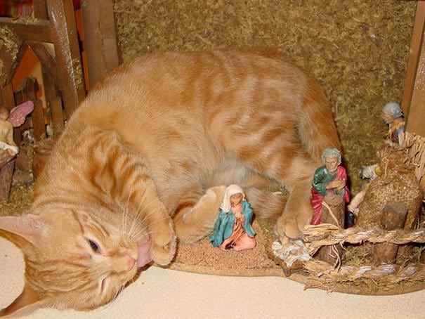 29 фото котов в рождественских вертепах
