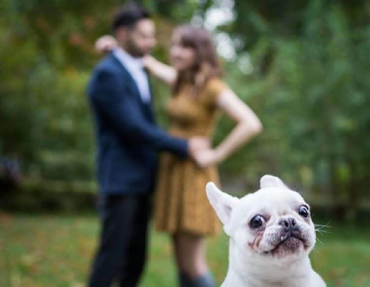 27 забавных и трогательных фотоисторий из жизни собак
