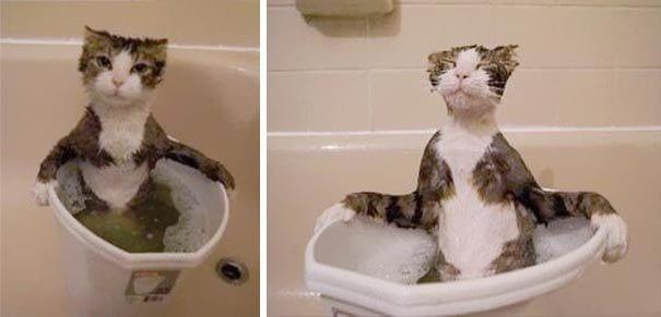 23 фото смешных котов в непростых ситуациях