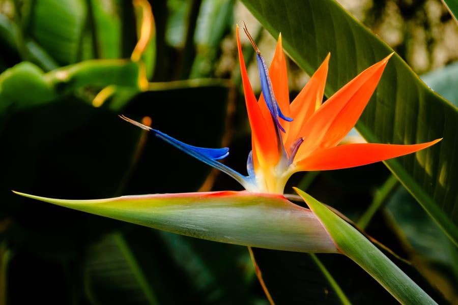 10 самых необычных цветов в мире