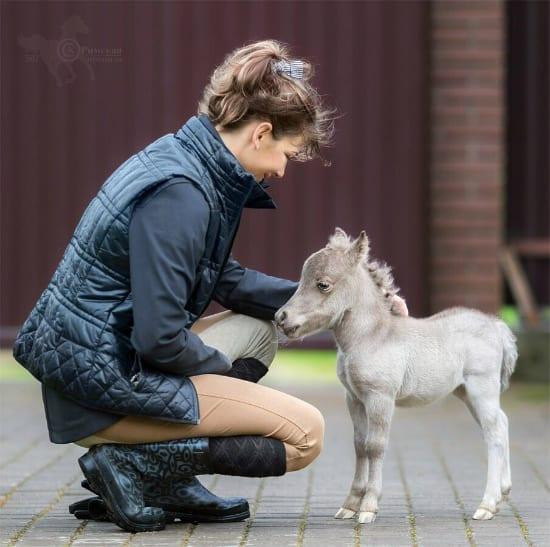 В России родился самый маленький жеребенок в мире