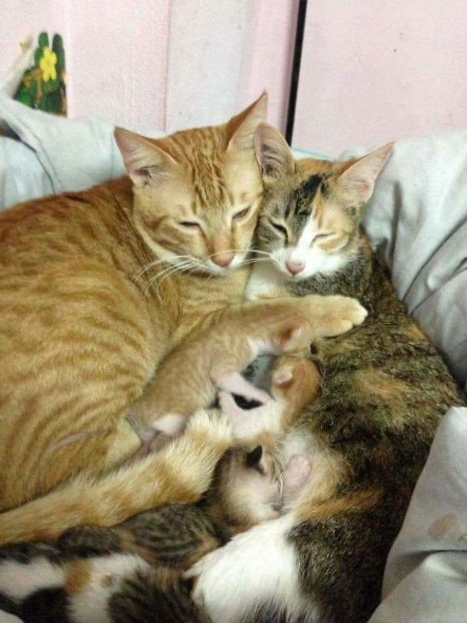 Кот поддержал кошку во время родов и покорил этим тысячи сердец (10 фото)