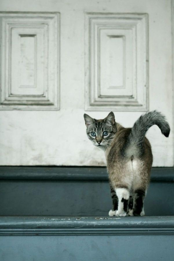 15 раздражающих признаков того, что кошка признается вам в любви