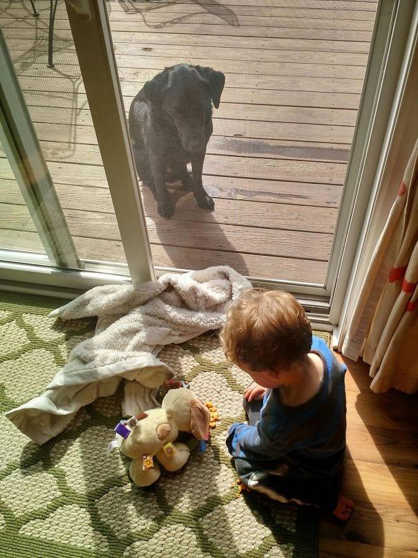 Что будет, если оставить ребенка наедине с животным на 5 минут