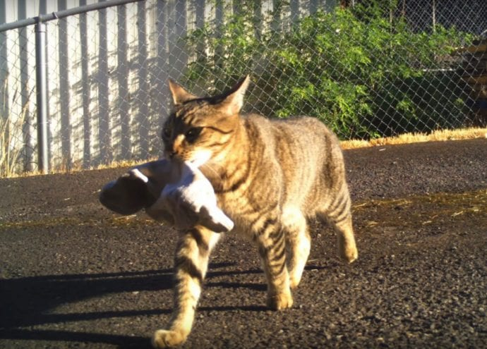 Кошка уже 4 года ворует чужие, иногда весьма необычные вещи