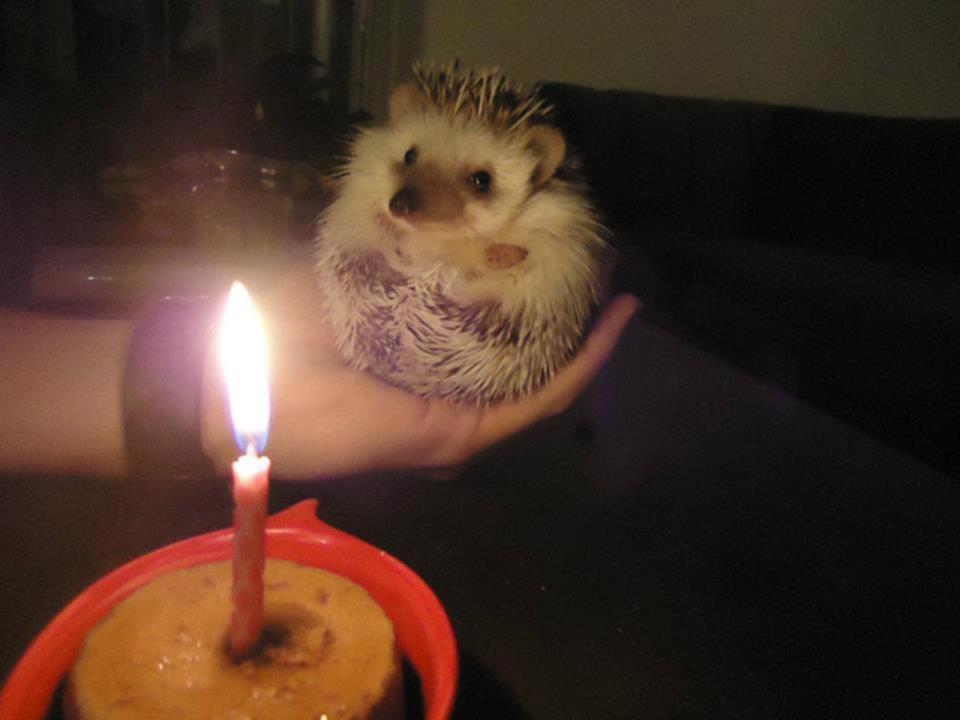 Забавные реакции животных на праздничное угощение в честь их Дня рождения