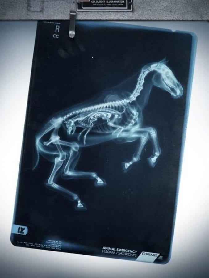19 рентгеновских снимков беременных животных