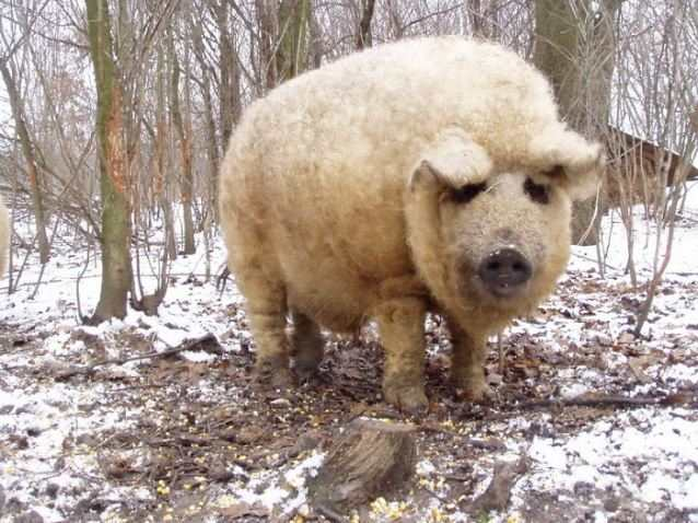20 очаровательных животных, прическе которых можно позавидовать