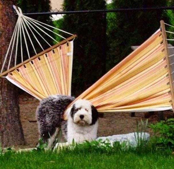 33 фото нелепых моментов из жизни собак