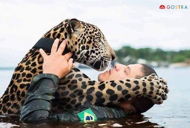 Солдаты спасли тонущего ягуара голыми руками, и он оценил это