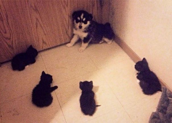 44 cлучая, когда хозяева хотели подружить кота с собакой, но что-то пошло не так (фото и gif)
